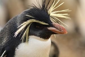 עדכון גוגל פינגווין
